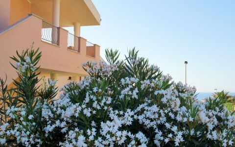 830) Solevacanze A6, Valledoria